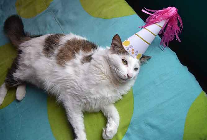 Katze geburtstagssprüche Geburtstagswünsche für