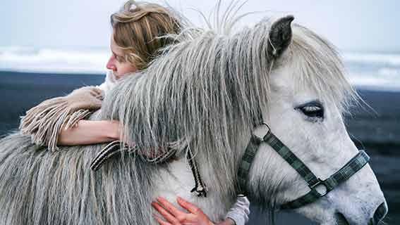 Geburtstagswünsche für Pferde