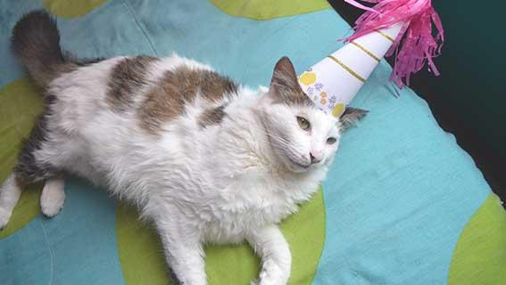 Geburtstagswünsche für Katzen & Katzenliebhaber