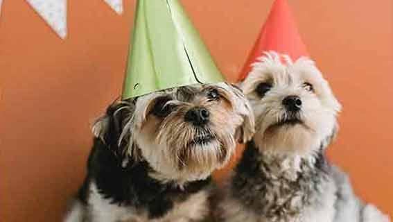 Geburtstagswünsche mit Hund